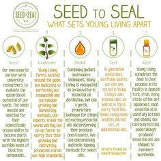 why choose young living essential oils - Google Search