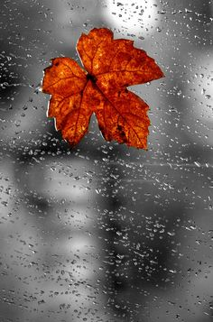 Rainy Fall day, great for staying in and snuggling under a blanket with a good…