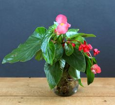 grow-indoor-plants-in-glass-bottles-apieceofrainbow (6)