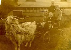 The kids look cute, but those horns look dangerous!