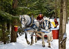 We're coming into maple sugaring season.  --Credit: Jeffrey Newcomer