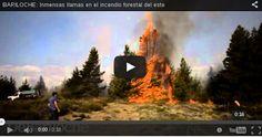 Piedra del Aguila.-: Mirá cómo arrasan con los pinos las llamas del inc...