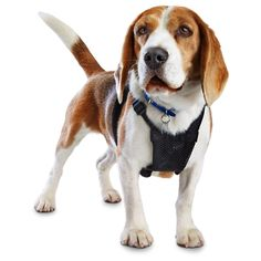 Good2Go Black No Pull Dog Harness - Durable nylon harness has a no pull design that encourages less pulling with this gentle dog harness. - http://www.petco.com/shop/en/petcostore/good2go-black-no-pull-dog-harness