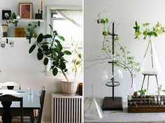 20 Unforgettable Indoor Plant Displays & Ideas