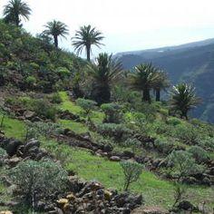 Urlaub in der Natur auf El Cabrito - La Gomera