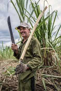 Cuba ,sugar cane.