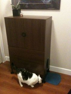 Hide the litterbox with an IKEA Engan cabinet, leaving the drawers out. This one even has a motion sensitive light, for kitties that are afraid of the dark ;) // cat hack