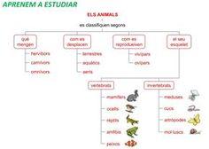 Resultat d'imatges de els animals a primaria Natural, Diagram, Map, Animals, Note Cards, Science, Studio, Architecture, Animales