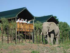 Addo Rest Camp - Accommodation in Addo. Addo Game Reserve And Bush Lodge Accommodation, Western Region, Eastern Cape, South Africa St Croix Island, Wilderness Trail, Elephant Park, Herd Of Elephants, Ocean Cruise, Safari Adventure, Park Resorts, Port Elizabeth