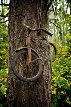 "The caption read ""A boy went to away to war in 1914 and left his bike chained to this tree.  He never returned, leaving the tree no choice but to grow around the bike."""