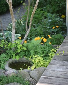I was just longing for the green of the summer. The yellow forest poppy ged Backyard Planters, Small Backyard Gardens, Small Gardens, Front Yard Patio, Front Yard Landscaping, Water Garden, Garden Pots, Small Garden Inspiration, Front Gardens