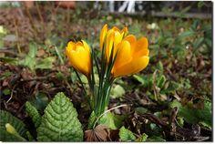 Spring in my garden in a break of rain | Flickr - Photo Sharing!