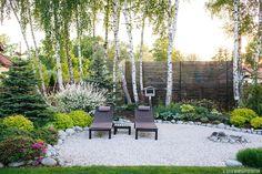 Love the white birch, evergreen, tri-color willow combo Backyard Garden Design, Garden Landscape Design, Small Garden Design, Back Gardens, Small Gardens, Evergreen Garden, Minimalist Garden, Garden Park, Fence Landscaping