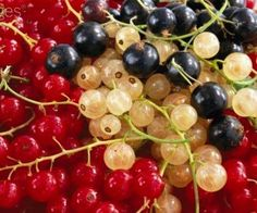 Red currant, currant and black currant