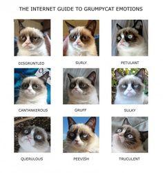 Grumpy Cat Emotion Chart