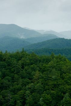 Green trees in the Great Smoky Mountains