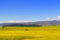 Tasmania now Australia's top wine tourism region
