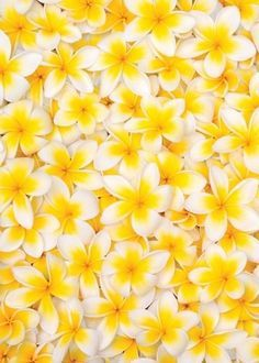 yellow things - Google Search