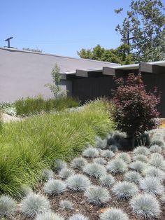 Ornamental grass garden