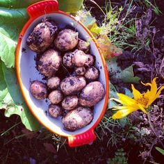 Potatoes in my own garden! 20140602-145039.jpg