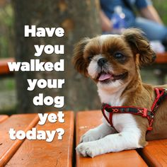 Have you walked your dog yet today? https://www.thedogsway.com/