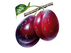 New Fruit Cartoon Image Ideas L'art Du Fruit, New Fruit, Colorful Fruit, Fruit Art, Fruit And Veg, Fruits And Veggies, Growing Vegetables, Photo Fruit, Fruit Picture
