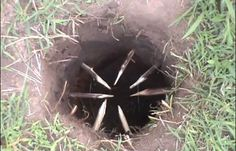 Apache Foot Trap | Sneaky Survival Snare Traps To Keep You Alive #survivallife www.survivallife.com