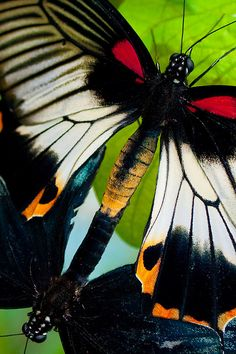 Jehovah Gods imagination shown even in the butterfly, look at its colors and design