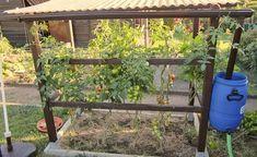 Tomaten sind unser liebstes Gartengemüse, werden aber leider gerne von der Braunfäule befallen. In einem Tomatenhaus bleiben sie gesund und liefern wochenlang leckere Früchte. So können Sie selber eines bauen.