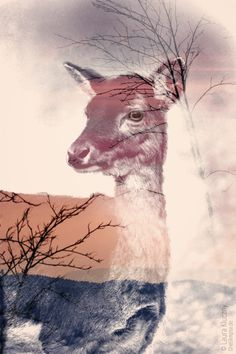 creative double exposure: beautiful and sweet deer. With tutorial! Kunst Online, Photo Retouching, Photoshop Tutorial, Museum, Double Exposure, Surrealism, Creative, Giraffe, Deer