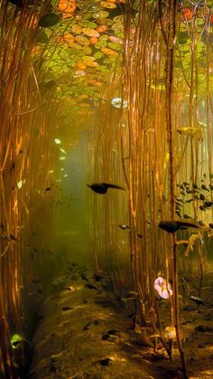 Water Tadpoles Underwater iPhone 8 wallpaper Wasser Kaulquappen Unterwasser iPhone 8 Tapete This image has. Image Nature, Nature Aesthetic, Aesthetic Green, Fantasy World, Belle Photo, Aesthetic Pictures, Nature Photography, Photography Aesthetic, Underwater Photography
