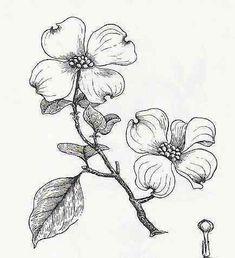 pen and ink dogwood flower Dogwood Trees, Dogwood Flowers, Dogwood Flower Tattoos, Flor Magnolia, Branch Drawing, Flower Sketches, Flower Doodles, Flower Art, Flower Branch