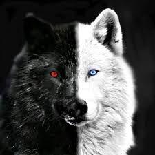 Eye Tattoo Wolf Wolves 62 Ideas For 2019 Anime Wolf, Wolf With Red Eyes, Wolf Eyes, Wolf Photos, Wolf Pictures, Wolf Wallpaper, Animal Wallpaper, Dragon Wolf, Wolf Artwork