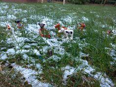 Auch bei dem kalten Wetter, müssen die Tiere, die Bäuerin und die Helfer raus   mytest.de Produkttests