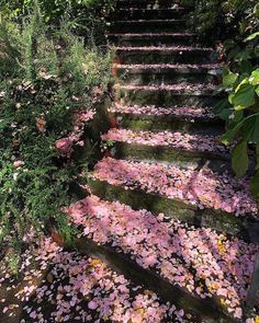 Nature I don& know how to describe just how calming these stairs make me. We Offer The Possibility Of Creating Books And Tables With Photos You. Spring Aesthetic, Nature Aesthetic, Flower Aesthetic, Aesthetic Girl, Voyager C'est Vivre, Fond Design, Sky Design, The Garden Of Words, Aesthetic Pictures