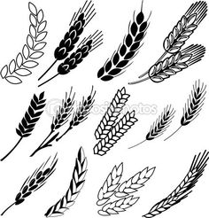 Wheat ears collection — Stock Illustration #22417609