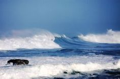 Wild Blue  Unfollow  By Grimalkin Studio/Kandy Hurley    The wild blue Pacific doing what it does best.