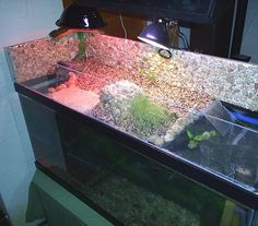 Ok I currently have my two 1.9 inch turtles ( YBS & RES ) in a Juwel Rio 180. Due to financial restrictions, this tank will be what we use for our turt...