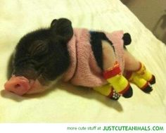I want one of these babies...