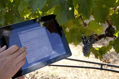Vinea is one of the renowned and reliable Vineyard Management Software in New Zealand developed by Infopower Ltd. Contract Management, Health And Safety, Horticulture, Case Study, Fields, Vineyard, Software, Popular, Garden Planning