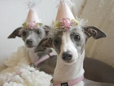 Happy Birthday to Daisy and Iris from Bella's Rose Cottage!!!!! Them's 1 now!