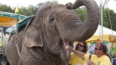 PETITION! Retire 46-year-old elephant Beulah after 19 years of  abuse and exploitation  Please re-pin to save her. Thank you.   https://www.change.org/p/retire-46-year-old-elephant-beulah-after-19-years-of-exploitation?alert_id=luPdEqnvjl_4vhTIhWSzDSseu5ql3TB7aQLJExP9Y3QsvPoTCpSSgg%3D&utm_content=buffer7c68a&utm_medium=social&utm_source=pinterest.com&utm_campaign=buffer