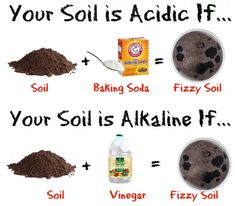 How To Test Soil pH Without a Kit Testing soil pH without a kit is actually quite simple and all you need are a couple of ingredients that you probably already have in your home! Test soil pH without a kit in seconds! Organic Gardening, Gardening Tips, Growing Blueberries, Blueberry Bushes, Uses For Coffee Grounds, Soil Ph, Different Vegetables, Different Plants, Vegetable Garden Design