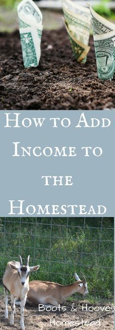 Homestead Income | Make money from Homesteading | Farming | How to make money | How to add Income | Farming for profit | How to ranch for profit | Market Gardening | How to get started with Homesteading | How to get started with market gardening