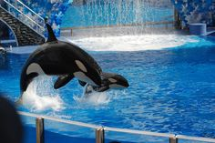 9 Times SeaWorld Lied To Your Face  http://www.seaworldofhurt.com/features/9-times-seaworld-lied/