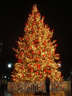 Spectacular Outdoor Natural Giant Christmas Tree Decoration Design ...