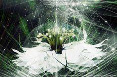 WHITE FLOWER. Photography: Russell Tomlin. Illustration: Tatiana Plakhova / complexitygraphics.com