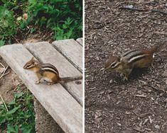 Escapade autour de Toronto - les jardins botaniques d'Hamilton Escapade, Botanical Gardens, Hamilton, Toronto, Animals, Animales, Animaux, Animal, Animais