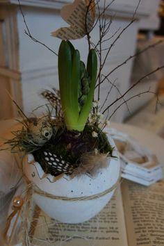 Eine frühlingsfrische Deko für Tisch oder Kommode.... In einem wunderschönen Pflanztopf in Form eines aufgebrochenen Ei`s fühlt sich eine blaue Hyacinthenzwiebel sehr wohl und freut sich auf ihren...