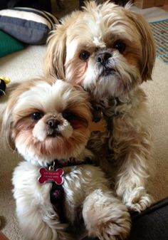 two adorable dogs